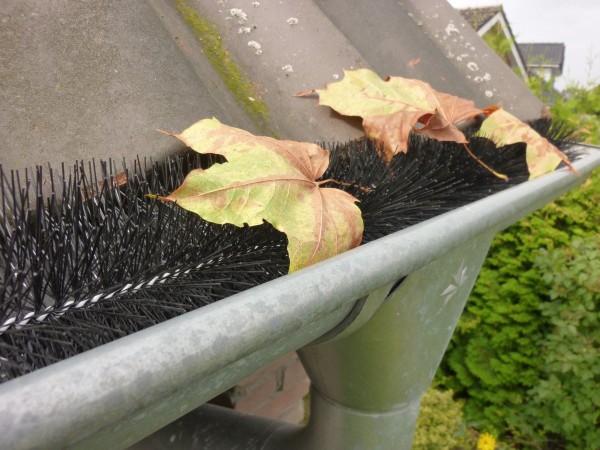 Blätter Blatt Schutz Mader Dachrinne Bürste