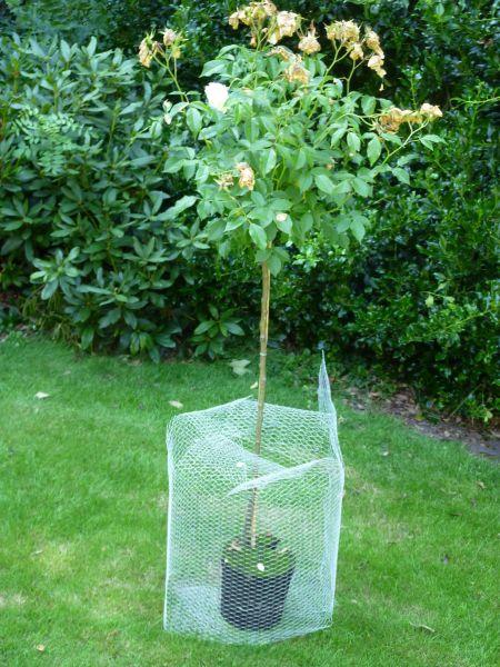 Wühlmauskorb 50 cm x 50 cm Schutz Wühlmaus Schermaus Wurzelschutz Bäume Mäuse